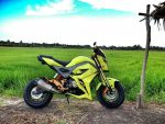 2017 Honda Grom Exhaust / MSX 125 Motorcycle - Mini Naked Sport Bike / StreetFighter - MSX125SF